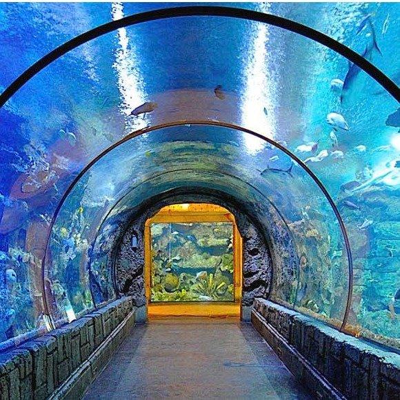 曼德勒海岸鲨鱼礁水族馆