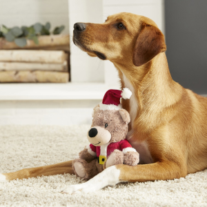 Buy 3 Get 1 FreeChewy Dog Supplies on Sale