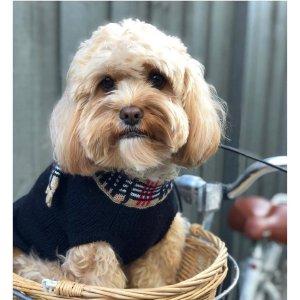 低至4.5折 $39收豪华床垫Myer 精选宠物服饰、宠物垫、牵引绳等热卖