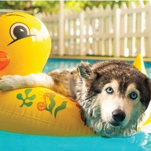 Up to $30 offSummer Sale @ Only Natural Pet