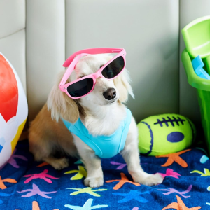 Up to 70% OffChewy Hundreds of Pet Toys on Sale