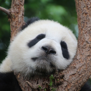 As Low As $342Chengdu Roundtrip Airfare from US Cities