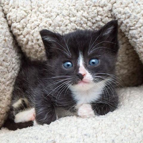 Up to 19% OffArm & Hammer Cat Litter on Sale