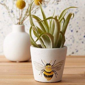 5.5折起 封面小蜜蜂花盆$3.99Simons 手绘花盆、编织花盆 绿植爱好者必败 装饰更温馨