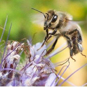 夏季来袭,如何应对蜱虫、蚂蚁等蚊虫?答案尽在本篇!德国夏季防虫攻略