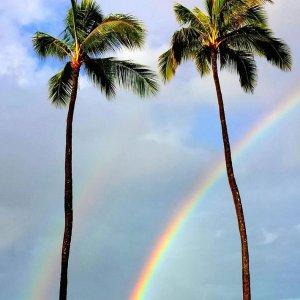 直飞往返仅$109起 1-3月日期Hawaiian Airlines 加州多城市往返夏威夷檀香山航班白菜价