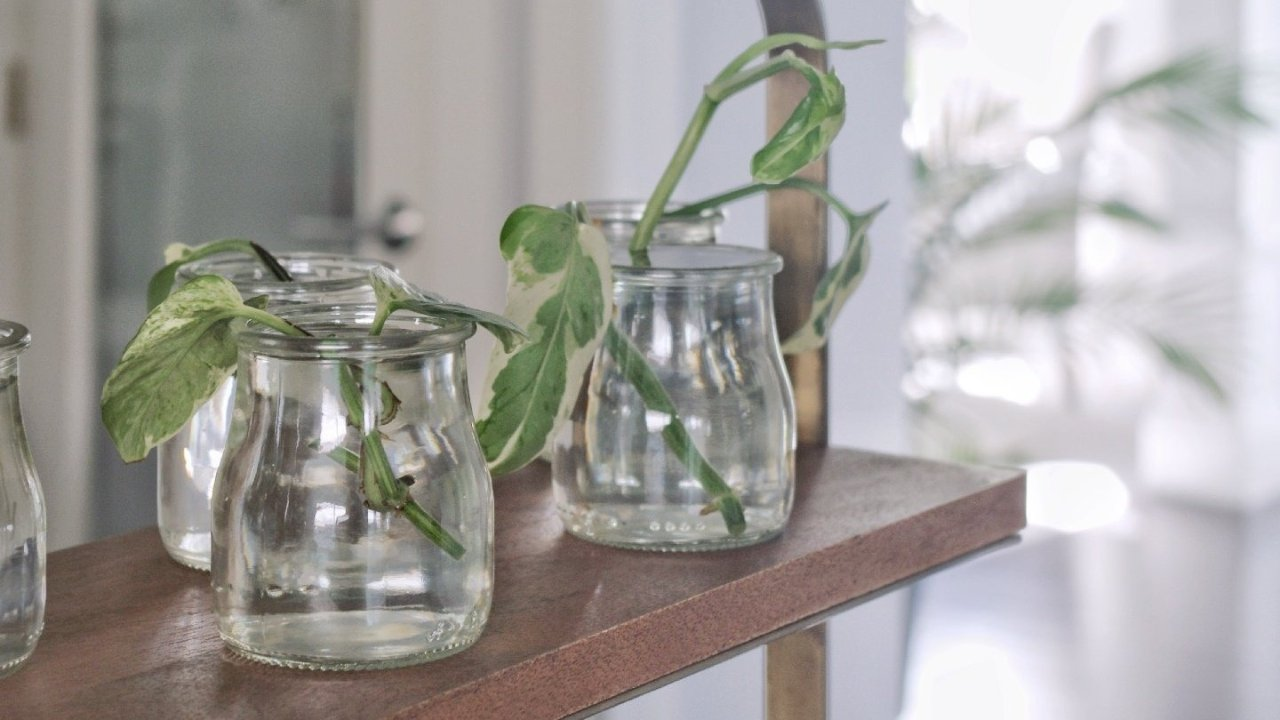 水培植物攻略 | 除了水培葱、这些蔬菜花草都可以在家水培!新手也能学会的水培技巧