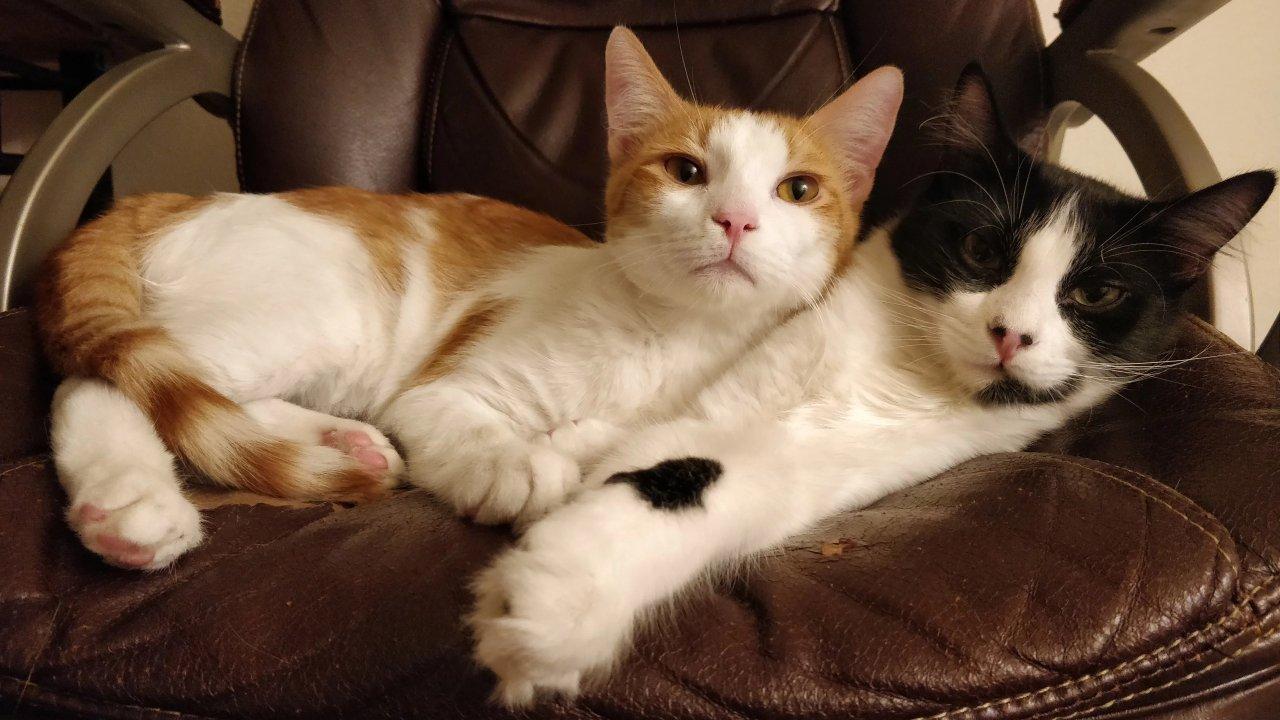 领养小猫咪 | 养猫二三事