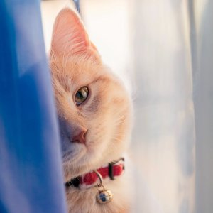 Up to 65% OffPetco Selected Cat Collars and Leashes on Sale