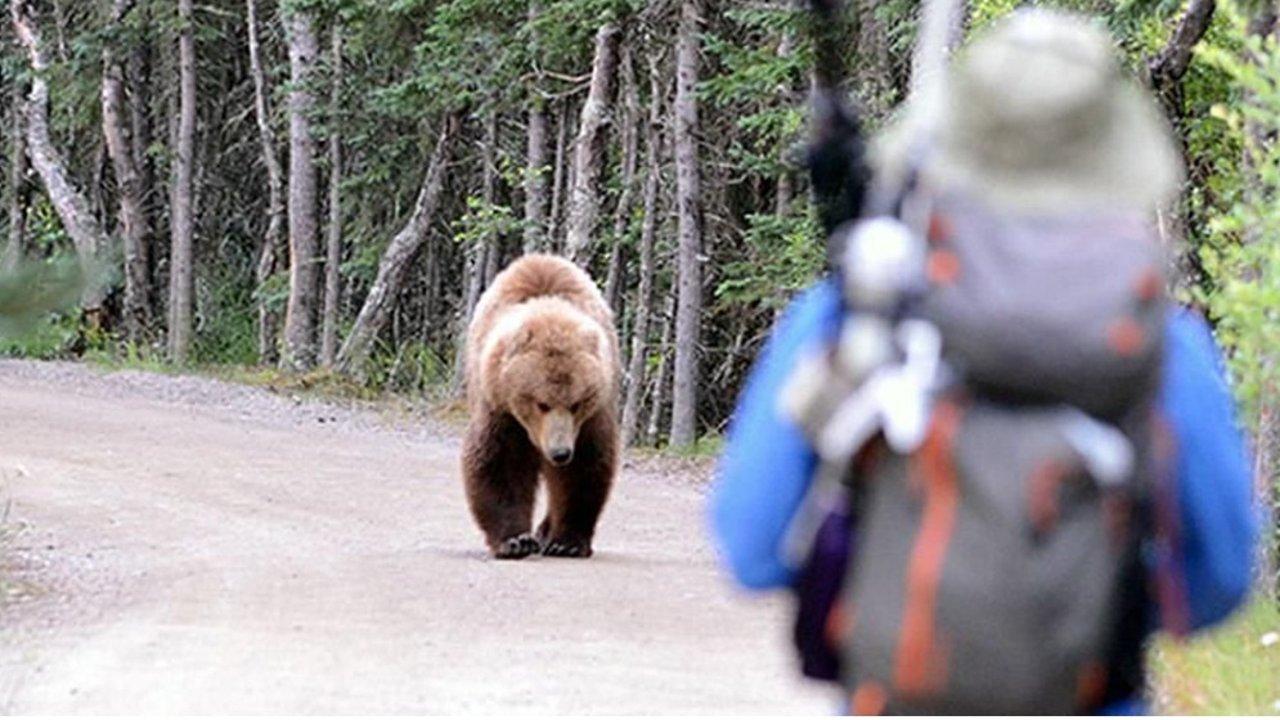 公园郊游碰上熊?遇猛兽这些自保方法才真靠谱