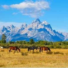 From $541.449-Day YellowStone Tour From Los Angeles