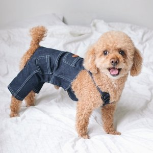 一大波萌萌哒泰迪狗来袭宠物知多少 贵宾犬饲养大全