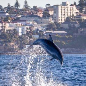$39 (原价$60) 约会游玩好时机悉尼Go Whale Watching 海上探险游玩观鲸之旅团购