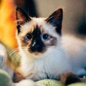 你的TA也许就在那里等着你哦Petco 每周六、周日中午11点 猫咪领养活动