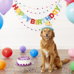 As low as $1Chewy Pet Birthday Shop