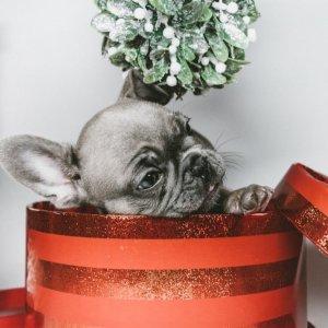 低至7折 + 额外8.5折Petco 可自定义的宠物用品 最佳送礼选择