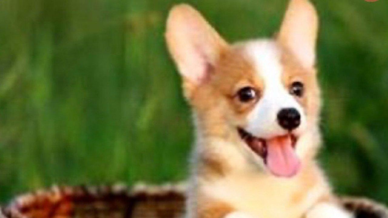 新手养狗需要买什么,请收藏这份购买清单