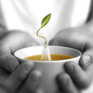 6折起限今天:Tea Forte CM 多种口味趣味茶包一日特卖 送人佳品