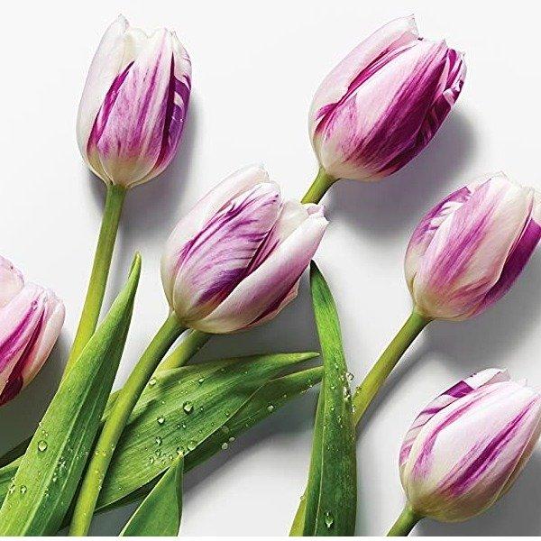 Floral 郁金香鲜花花束 20朵 颜色随机