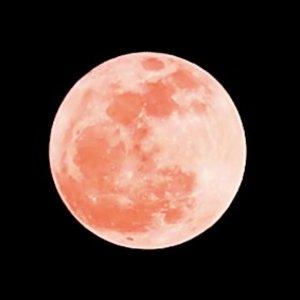 超级血月月全食、日环食陆续来约4月26日记得抬头仰望夜空 分享最大、最圆的超级粉红月亮