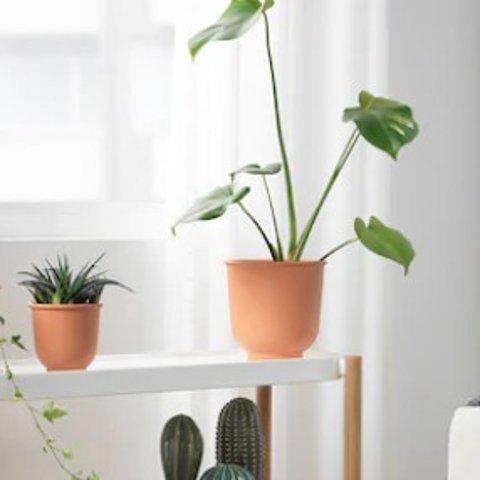 €0.5起装点夏日的家IKEA 人造盆栽热卖 春意盎然 万物复苏 搞个假花假草养养吧