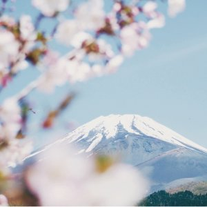From $13999-Day Japan Guided Tour with Hotels and Air