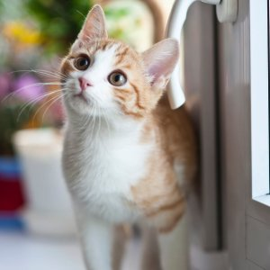 Buy 3 Get 1 FreeChewy Selected Cat Litter on Sale