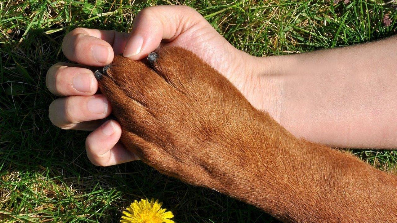 植物和宠物不可兼得|美国居家常见的对猫狗宠物有毒的植物/如何判断中毒/如何防范/中毒了怎么办?