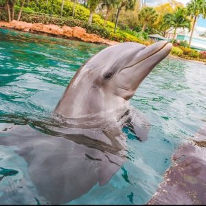 Save up to 45%SeaWorld Orlando Tickets On Sale
