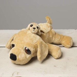 狗狗妈妈和宝宝