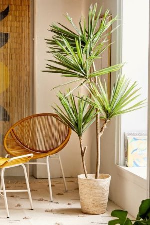 Urban Outfitters Yucca 6' Potted Faux Tree