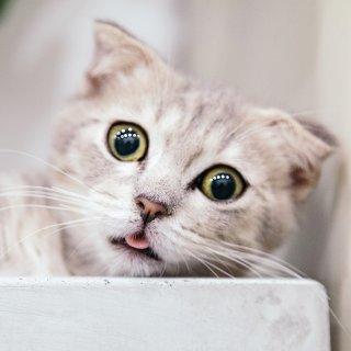 第2件5折 + 满额送礼卡Petco 精选猫湿粮罐头促销