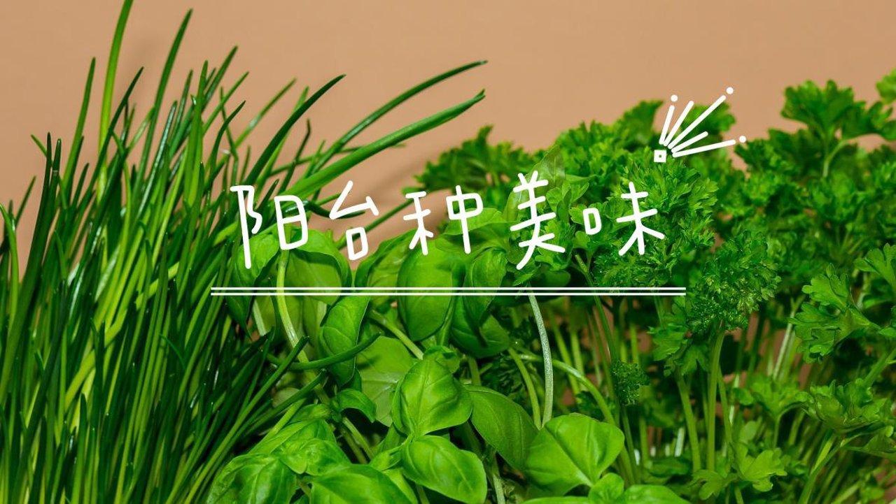阳台种美味 | 盆栽香草香料,你需要知道的一切