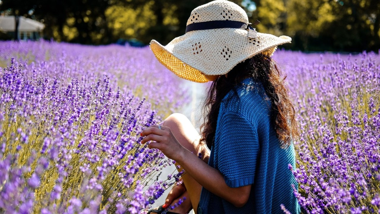 法国薰衣草攻略,什么时候、去哪儿看薰衣草?附2021薰衣草节信息