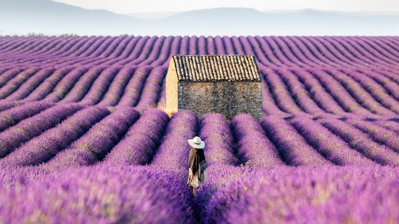 英国薰衣草庄园推荐2021   6大英国最美薰衣草庄园打卡全指南!开启你的浪漫夏日!