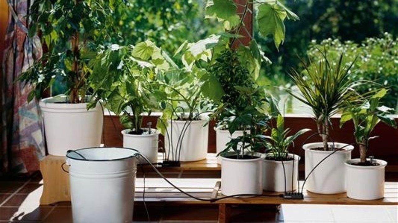 假期不在家如何照料家里的植物?| 自制DIY小妙招、浇水防虫