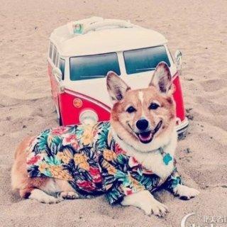 周末去哪玩全美8城周末活动精选: 柯基日 | 僵尸沙滩派对 | 万圣节宠物Parade | 汉堡节之战 | 超自然现象马戏表演