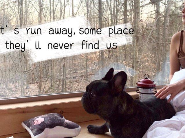 Getaway House, 和狗...