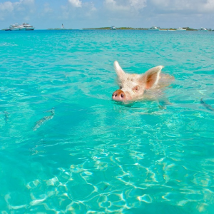 From $225The Bahamas: Fly Round-Trip to Nassau This Season