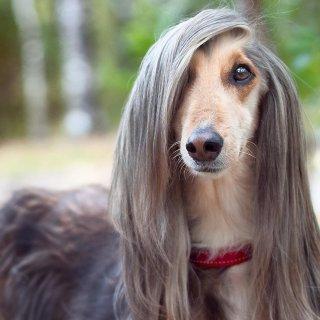 无端坠入宠物梦 惹却三千烦恼丝宠物知多少 毛发护理那些事儿