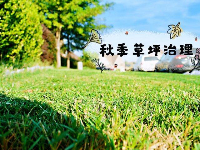 草坪小白的秋季百慕大草坪治理纯干货