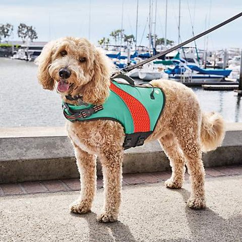 Up to 50% OffPetco Dog Life Jackets & Swimsuits on Sale
