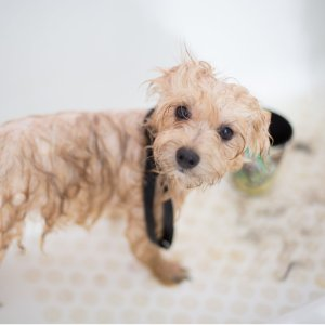 $20 offFull-service Bath or Bath with Haircut @ Petco