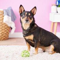 JW Pet 狗狗玩具