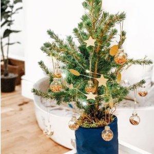 立减£10+免运费Bloom&Wild 迷你圣诞树 在家举行点灯仪式