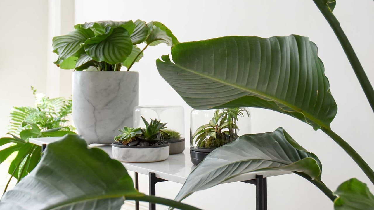 这些好看易养活的室内植物还能净化空气呢!