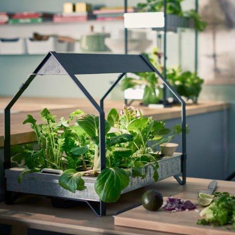 一起来探讨种菜技巧哦自家种菜攻略 不出门吃到新鲜菜 绿色健康无污染