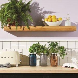 8折起 $11起感受桌上水培的魅力室内桌上香料小盆栽 办公室减压小植物