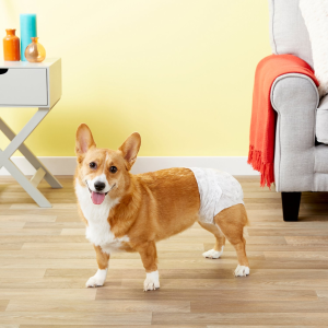Save 50% on First AutoshipChewy All Kind Dog Potty Products on Sale