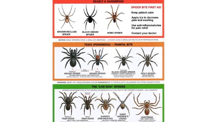 鬼蜘蛛 毒